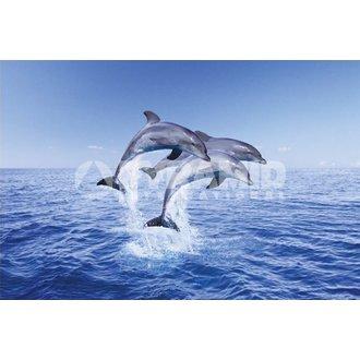 plakat Dolphin Trio - Pyramid Plakati, PYRAMID POSTERS