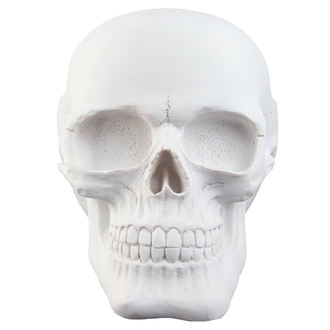 Skull Skull - White